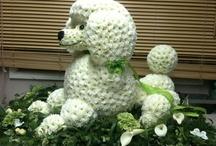 Животные из цветов