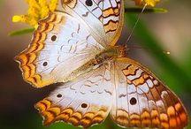 Butterfly ⓛ ⓞ ⓥ ⓔ