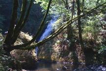 On Site Pics for My Book Set in Bridal Veil, OR