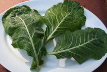 Vegetables / Varieties of healthy organic vegetables