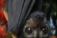 Bats - Adorable