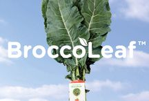 BroccoLeaf / There's a new healthy leafy green in town...BroccoLeaf! Discover how to enjoy this nutritious vegetable loaded with vitamins A, C, and K - deliciously - with these recipes.