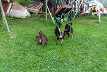 Bobi, Bea, Vito ja Bruno