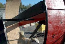 Ideas para colegio de perros