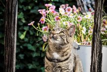 Cats/Katter