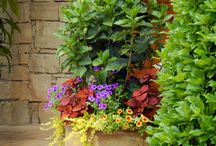 flowers and garden / Flowers and garden