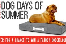 The Dog Days of Summer Contest / An inside look and chance to enter into contests going on at Cantoni!