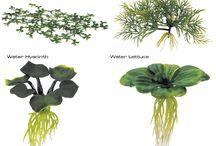 Tó, Vízinövények