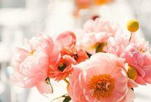 Color Pick : Coral Peach Pink