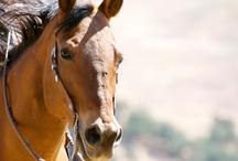Equus / Horses