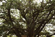 Tree house & outside play