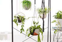 statement piece for indoor hanging plants