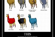 llamas!!! / by Kelly Belter