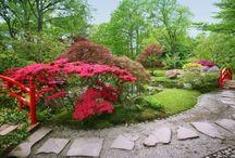The japanese garden / Petit jardin