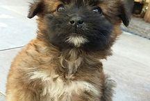 My dog Laika ❤