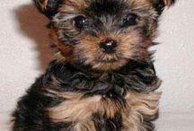 Puppies! / by Katie Pieper