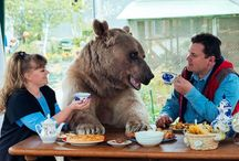 3 month old bear adopted and lives happily / This Russian couple, Svetlana and Yuriy Panteleenko, adopted an orphaned bear 23 years ago and are still living a mind blowing life with this wild pet.