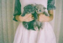 Cats / by Sarai Medrano