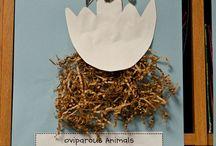 Exploring Birds in Kindergarten / This board includes ideas, activities, and resources for teaching about birds in kindergarten.