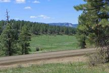 27 & 53 Laurel, Pagosa Springs, CO 81147 / Listing Broker - Shelley Low OWNER FINANCE: Greenbelt behind properties between Piedra and our lots. Seller is willing to owner finance with no balloon. Build on one and sell the other or keep this beautiful double lot for the perfect home. This is big enough that you can choose where to place your home. Paved road all the way up Piedra and a moment of unpaved road can lead to your driveway.