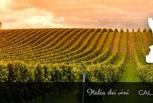 CALABRIA / Le migliori selezioni della Viticoltura-Olivicoltura Calabrese