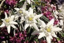 Blommor - Flowers