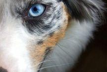 beauty dogs