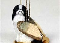 Japanese Chin / Japanese Chin pictures and gift ideas.