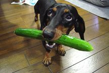 Pets Diet / How to make sure that you are picking the most wholesome food for your dog?