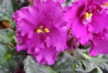 flowers-çiçekler