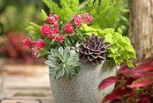 landscaping/garden ideas