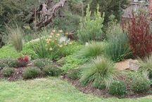 Moruya garden