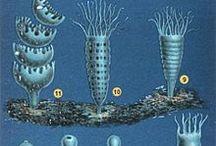 mereneläviä / Medusa, jellyfish, merihevonen, seadragon, fish, .....