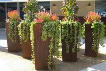 Succulent Design