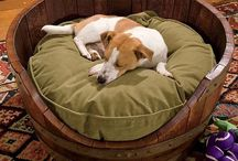 Bertie bad dog xxx
