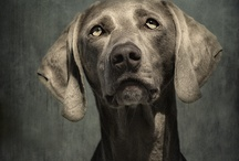 Dogs / by Manuel SanMiguel