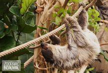 ZooParc de Beauval / L'actualité en images sur le ZooParc de Beauval (France)