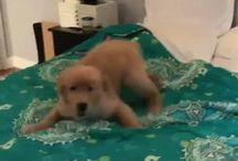 Favorite Funny Dog Videos / Funny Dog Videos