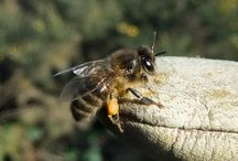 Bees and beekeeping / by Deb Parker