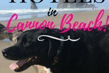 Pet-Friendly Travel! / All about pet-friendly travel!