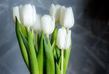 Photography experiments... / Kokeilin kuvata valkeita kukkia suurella aukolla taustaa pehmentäen