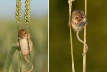 Adorable cuties