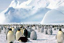 Ľadové ktálovstvo