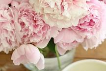 wedding flowers by papadakis