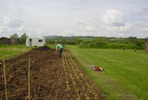 Dave's Market Garden / We have been joined this year by Dave Washington, who is creating an amazing market garden here at Old Bidlake, growing lots of lovely soft fruits and vegetables