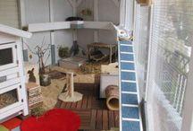 Rabbit stuff / Stuff for my rabbits  / by Janice Telfer