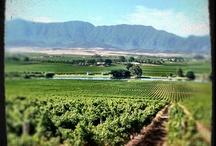 Van Loveren Wines ZA landscapes