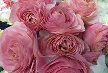Flowers - Άνθη