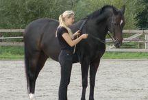 groundwork for horses