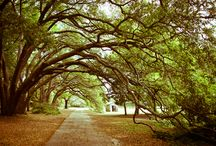 Around The Lowcountry / Check out the best of what the Lowcountry has to offer.